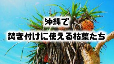 沖縄の浜辺で焚き付けに使える植物5選